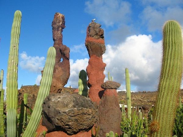 lanzarote cactus